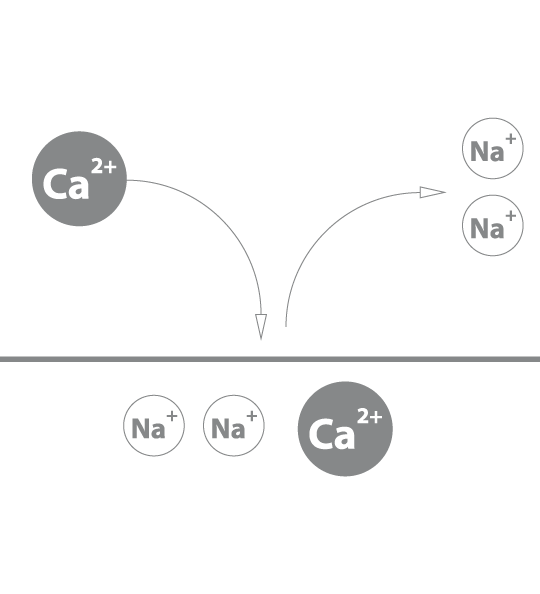 Ion exchange purification with Aragon 3